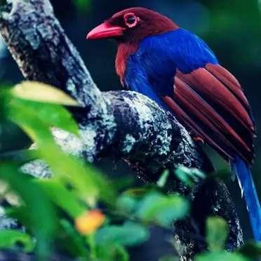 Birds-of-Sri-Lanka