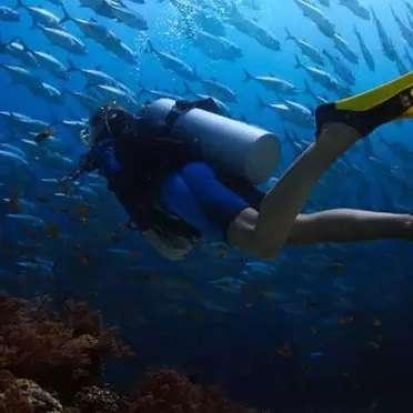 Scuba-Diving-4