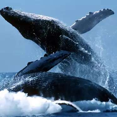 Sri-lanka-Whale-Watching-3-1