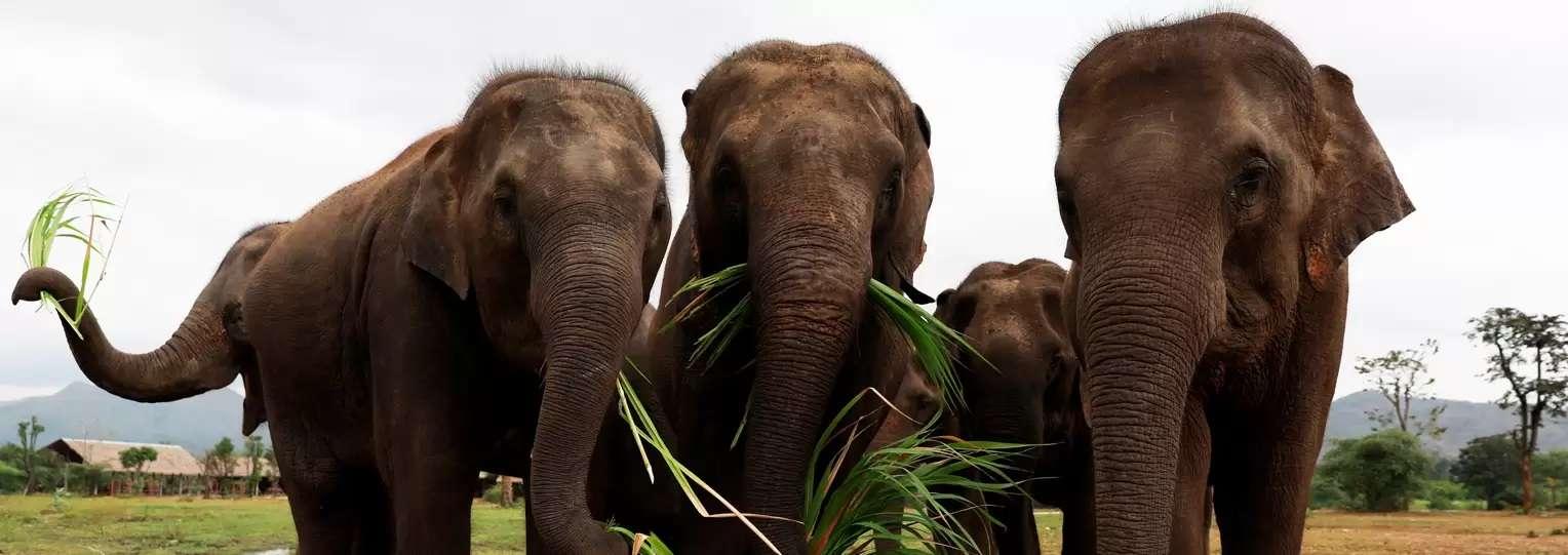 Elephant-Orphanage-Sri-lanka