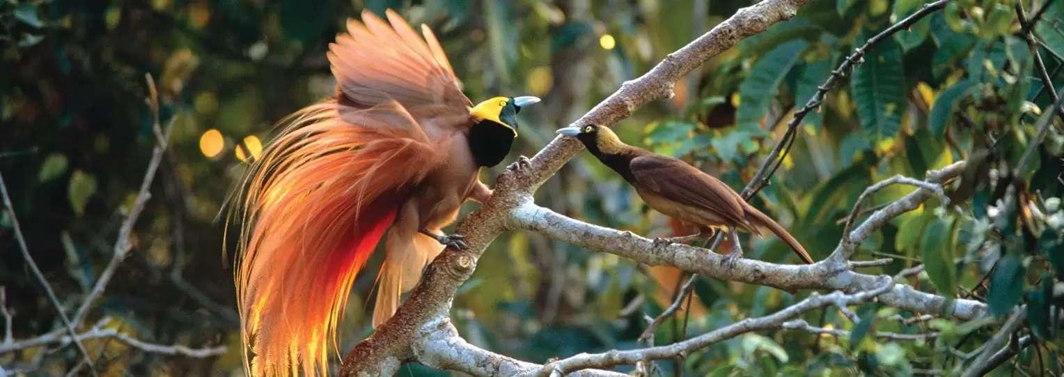 Sri-Lanka-Bird-watching-Tours
