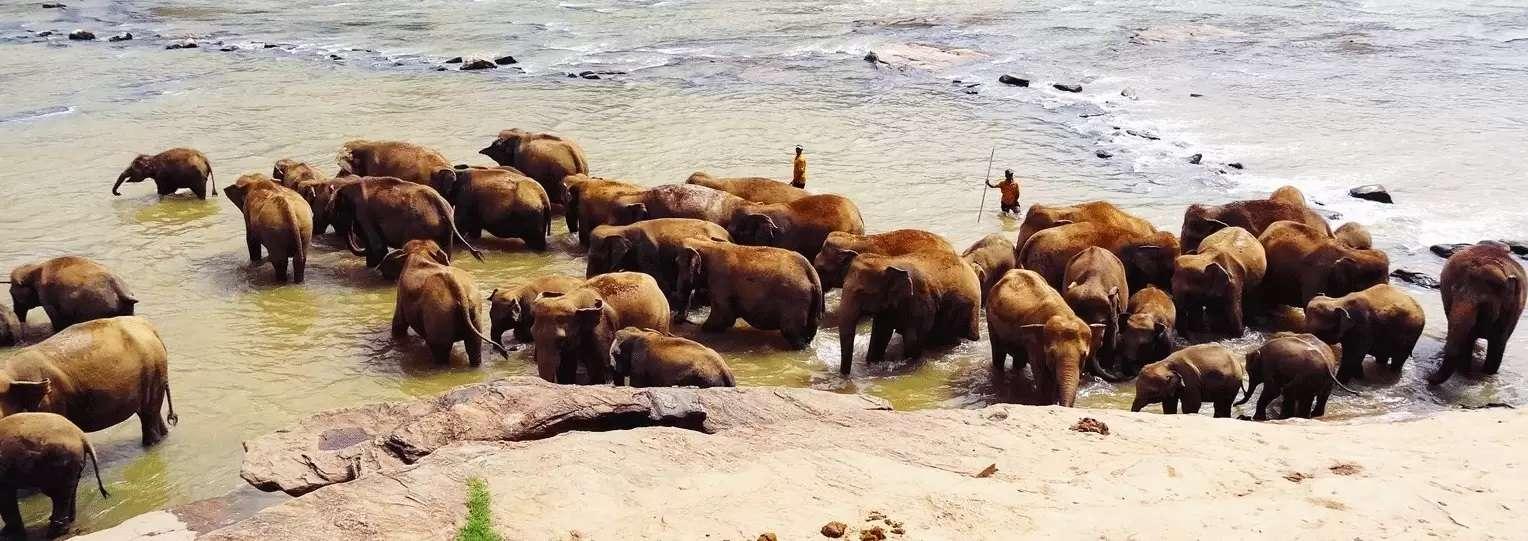 pinnawala-elephant-orphanage